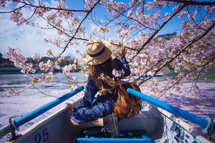 fiori di ciliegio quali sono le caratteristiche