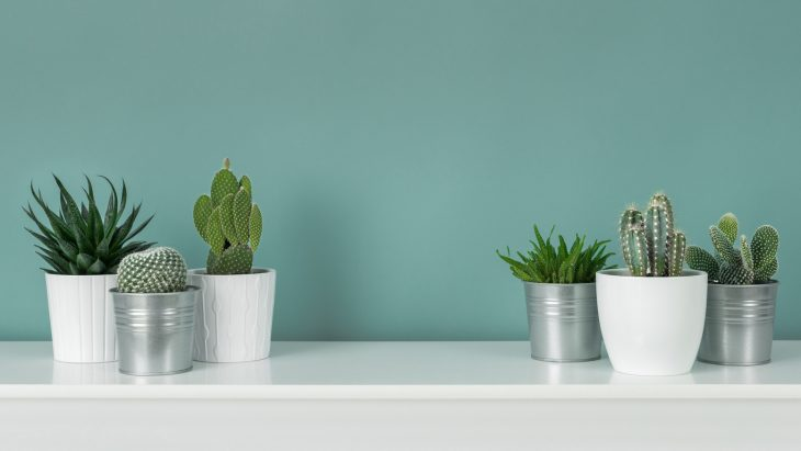 cactus come coltivarli in vaso