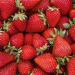 Fragola: proprietà, benefici e coltivazione del frutto più colorato dell'estate