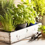 Piante aromatiche in vaso: le 10 regole della consociazione