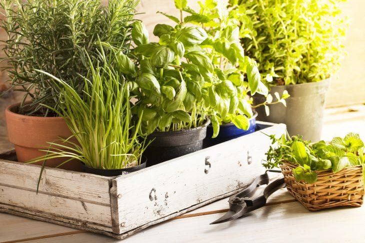 piante aromatiche la consociazione con gli ortaggi