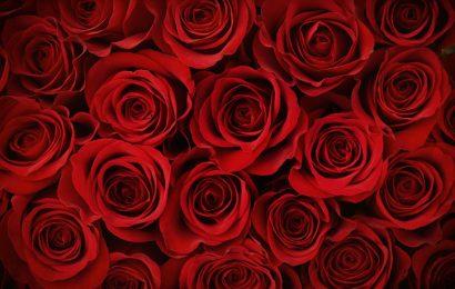 rosa i segreti della simbologia