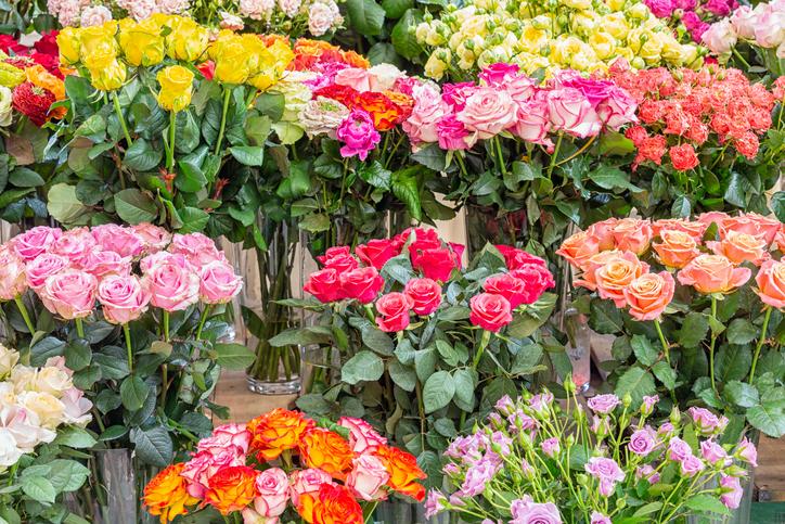 rosa quali sono le varietà e le loro caratteristiche