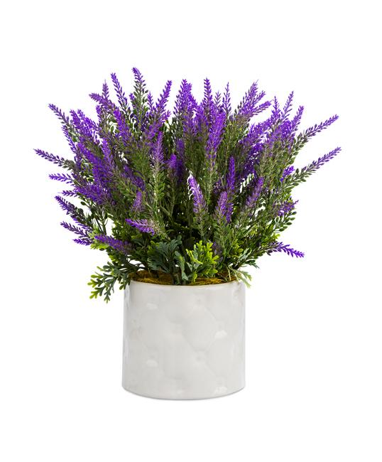 lavanda come coltivarla in vaso e a terra