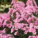 Piante perenni: guida per coltivarle in giardino