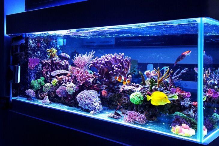 Come allestire acquario marino