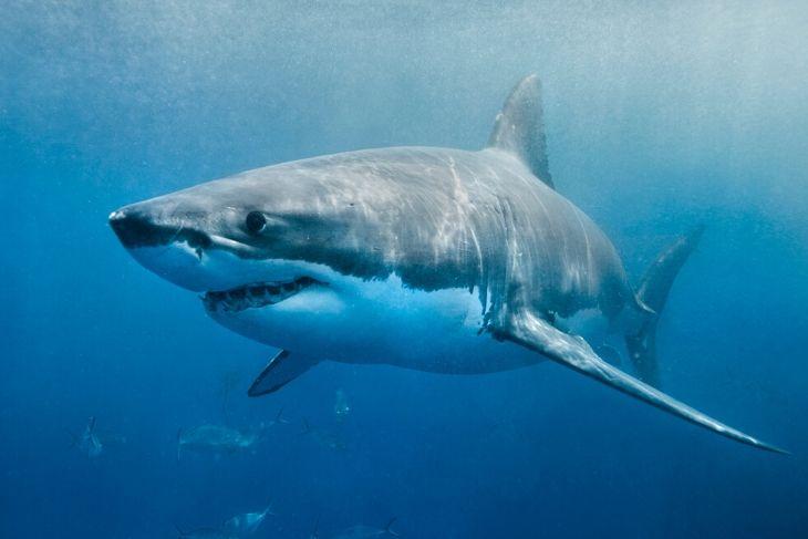 Acidificazione degli oceani rischio squali