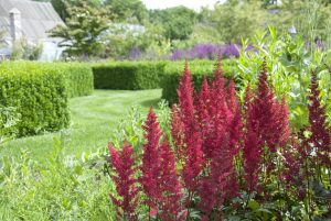 Piante da giardino rosa