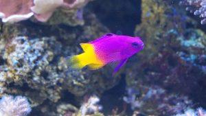 Pesci acquario marino
