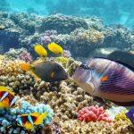 Pesci acquario marino: i 10 da scegliere