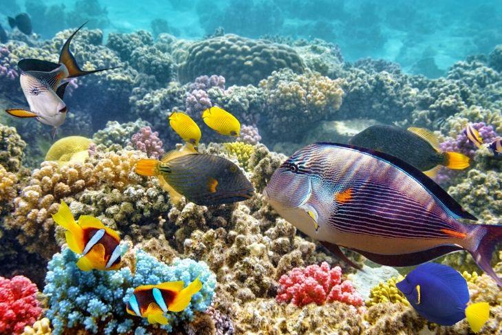 Pesci acquario marino da scegliere
