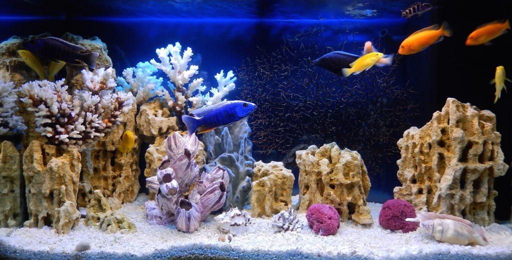 Pesci acquario marino facili