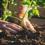 Agricoltura biodinamica: cos'è e come si pratica