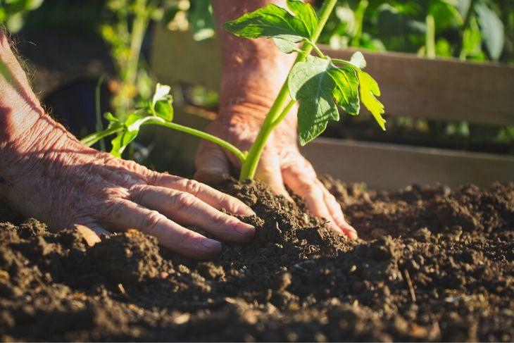 Agricoltura biodinamica: guida informativa