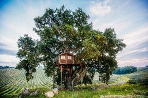 Agriturismo la Piantata Lazio