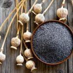 Semi di papavero: proprietà, utilizzo e benefici