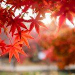 Acero Rosso: caratteristiche, storia, curiosità, comportamento