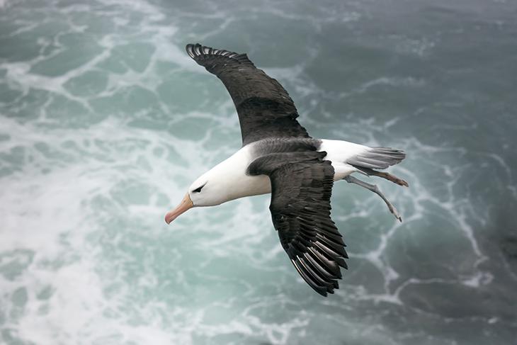 Uccello dei mari