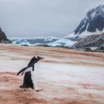 Neve rossa e caldo record: l'Antartide si sta sciogliendo