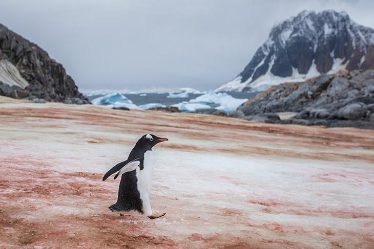 Antartide si sta sciogliendo: caldo record e neve rossa