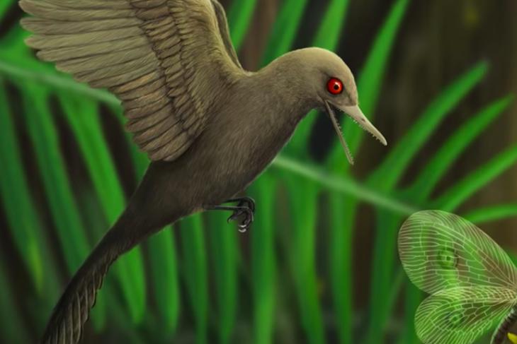 Trovato fossile di dinosauro colibrì