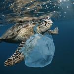 Pasqua green: arriva l'uovo plastic-free per salvare le tartarughe marine