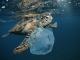 Pasqua green tartarughe marine
