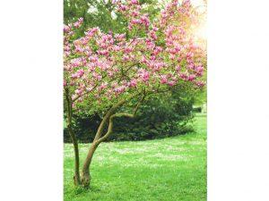 alberi sempreverde albero di magnolia