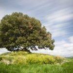 Giornata Mondiale dell'Ambiente: i dati che raccontano la salute della Terra