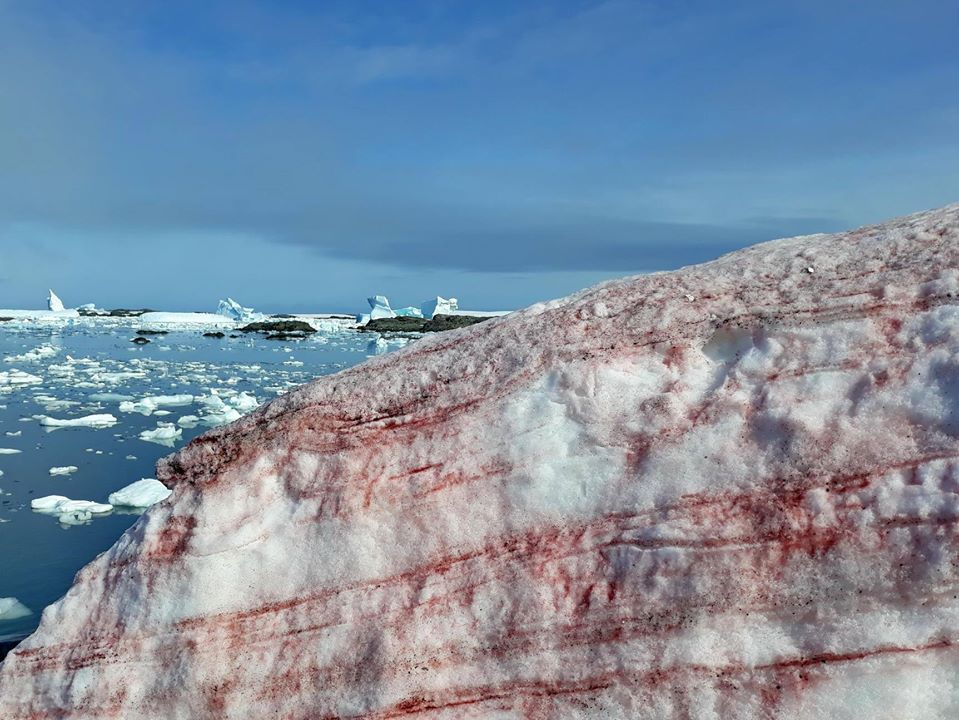 Antartide neve rossa