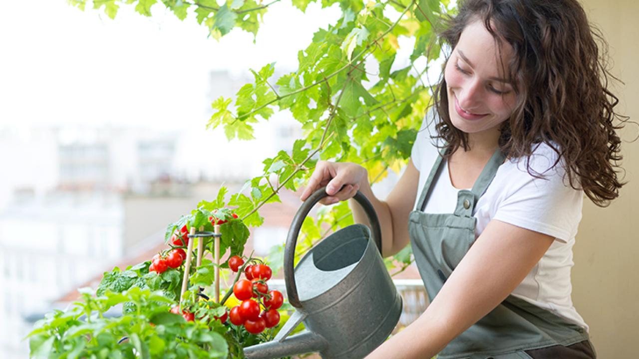 Come Coltivare Pomodori Sul Balcone orto sul balcone, come iniziare: guida per principianti