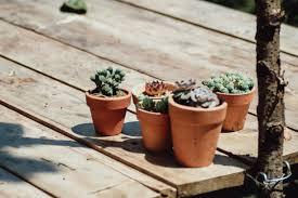 Vaso della pianta succulenta