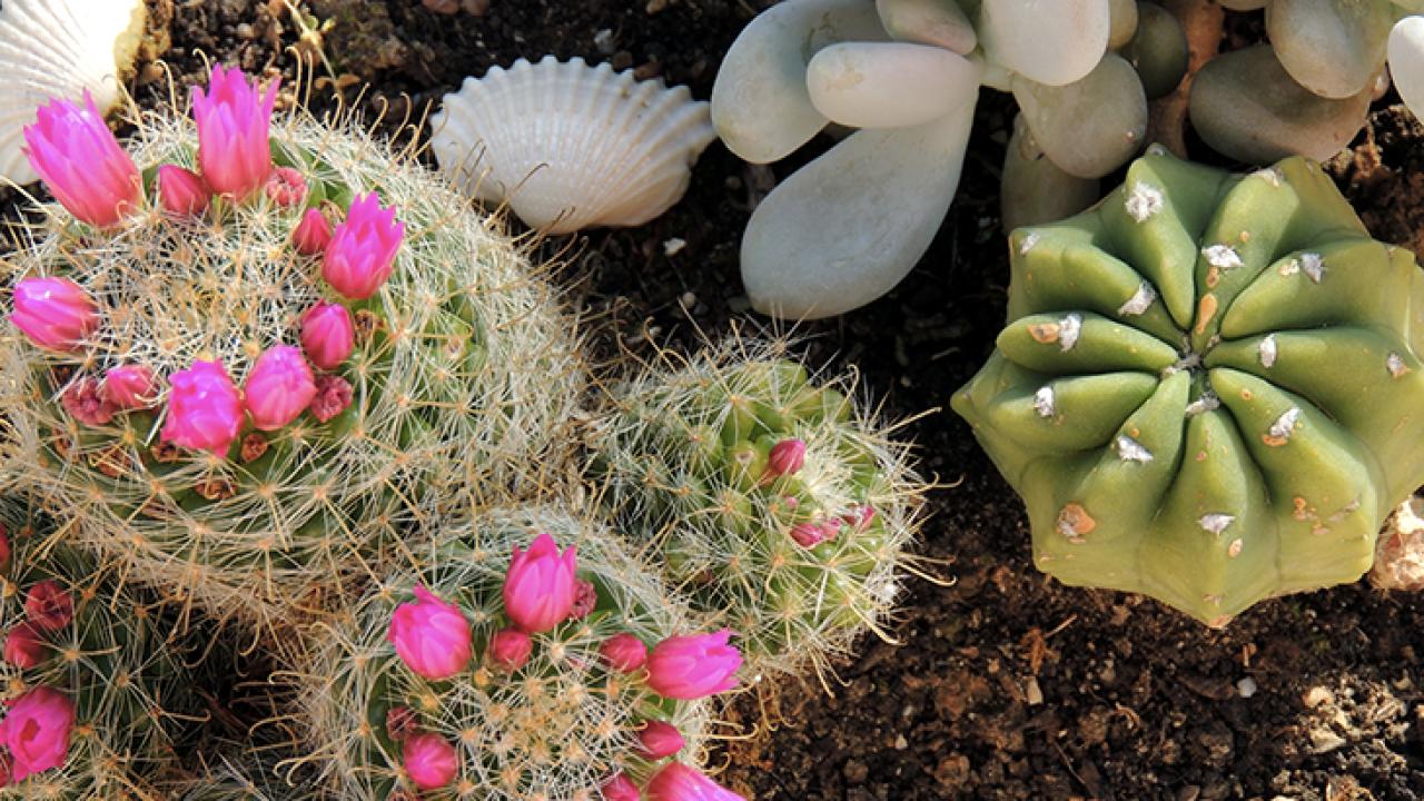 Piante Grasse Da Esterno piante grasse, guida completa: come prendersene cura