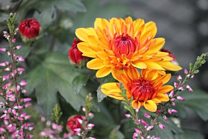 fiori giapponesi quali sono