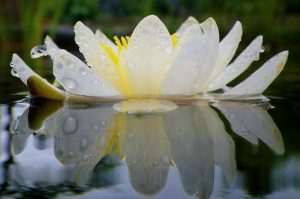 mazzo di fiori in acqua