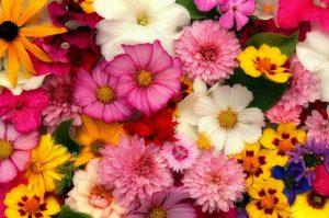 mazzo di fiori per stagione