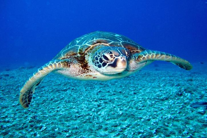 tartarughe spiagge india turisti e bracconieri