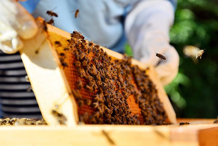 Diventare apicoltore: come si fa