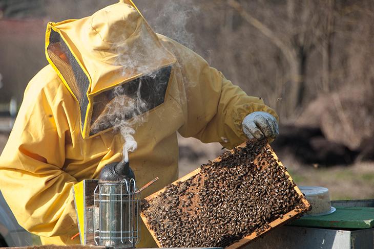 Estrazione miele apicoltori