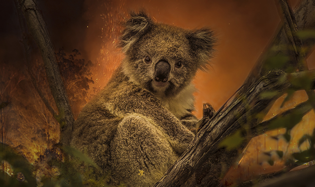 SOS incendi Australia