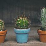 Cactus: guida completa alla regina delle piante grasse
