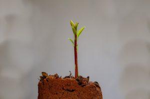cactus semi