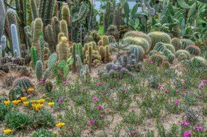 cactus suolo e illuminazione