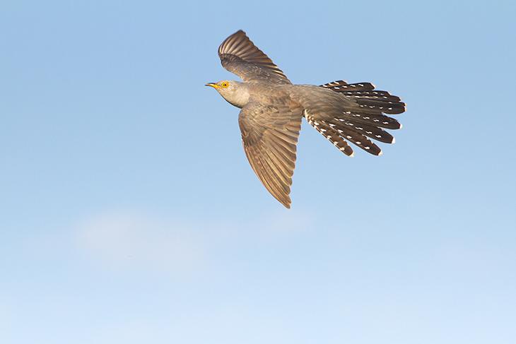 Uccello migratore