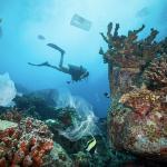 """Giornata Mondiale degli Oceani: centinaia di sub sui fondali per l'operazione """"Spazzamare"""""""