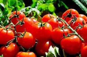 ortaggi come coltivare pomodori