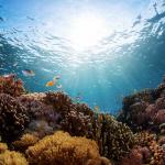 Cavallucci marini, corallo nero e aquile di mare: lo scrigno di biodiversità al largo di Roma