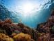 Cavallucci marini, corallo nero e aquile di mare: lo scrigno di biodiversità al largo di Roma alle Secche di Tor Paterno