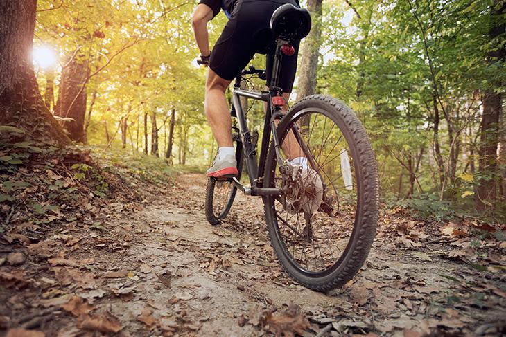 Percorsi in mountain bike