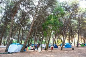 Camping mare